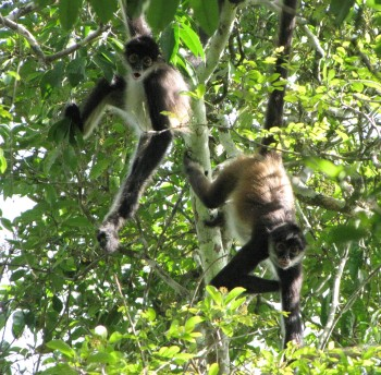 monkeys-spider-img_2728