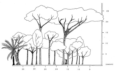 rb-cohune-riparian-profile