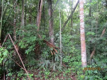 La Milpa forest